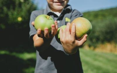 Alimentación ecológica infantil de alta calidad.